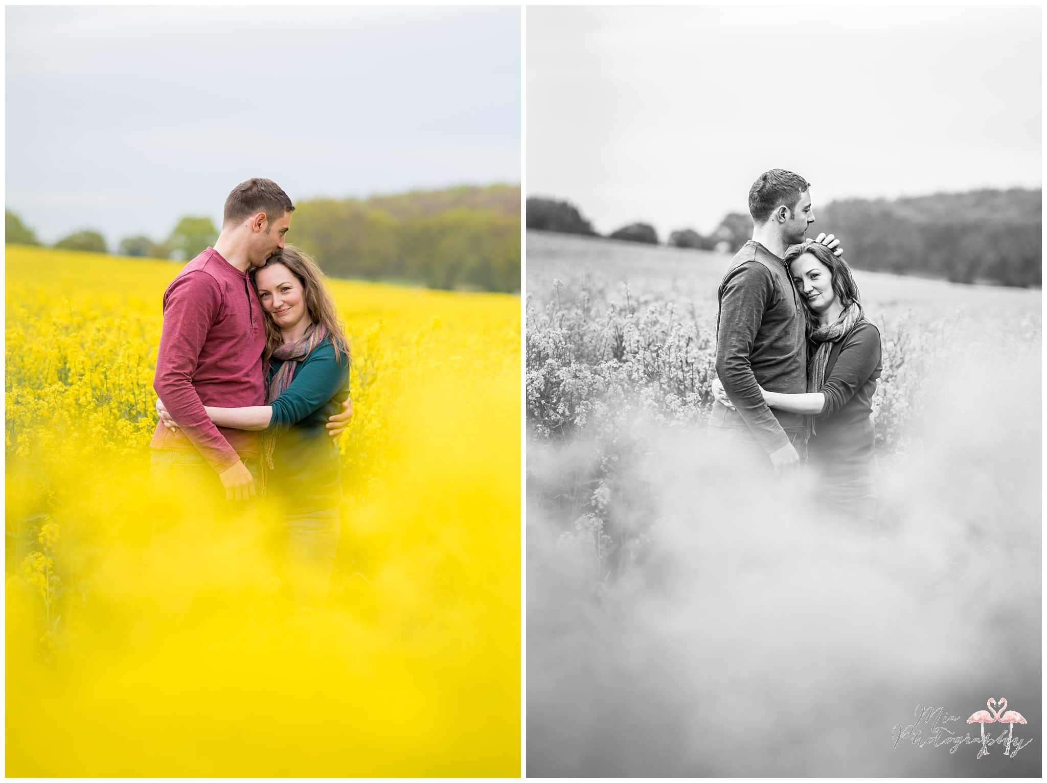 Rapeseed photography